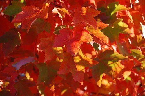 Fall Arkansas leaves