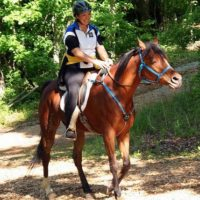 horseback riding in Eureka Springs