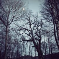 Spooky bare trees on dark night with moonlight