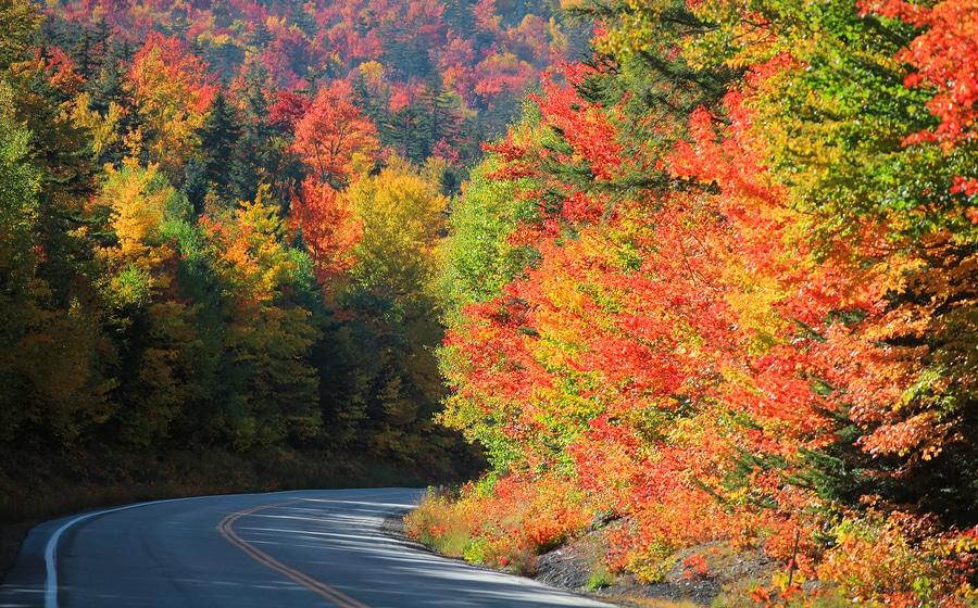 fall foliage in Eureka Springs Arkansas